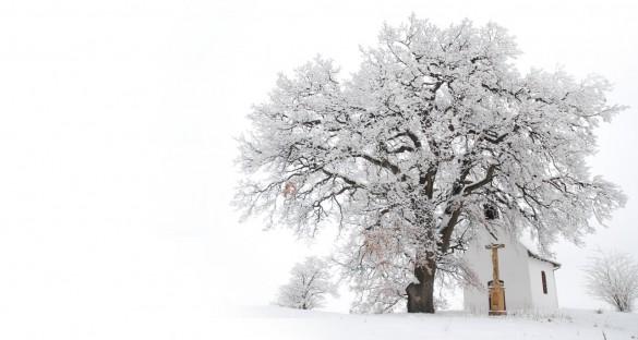 Év fája 2016 - Mohos tölgy